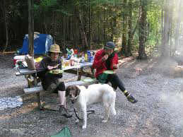 Taking a dog camping